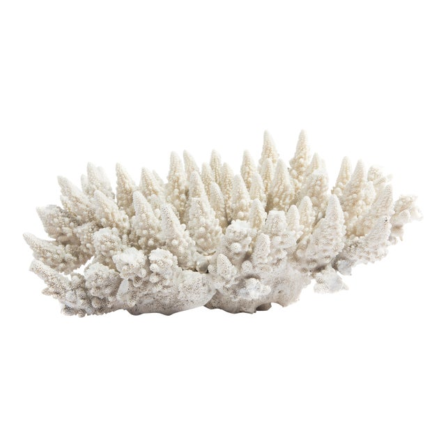 LARGE WHITE CORAL SPECIMEN - Image 1 of 10