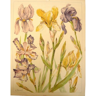 """""""Iris Flower"""" French Colored Print For Sale"""