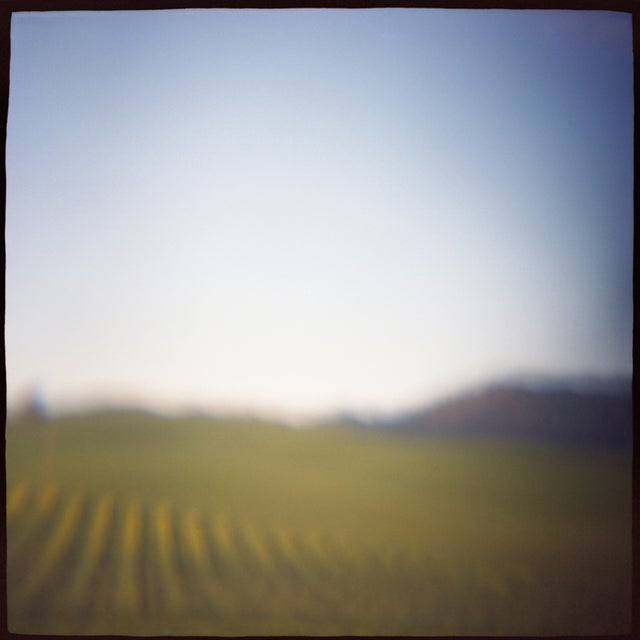 """Vineyard"" Photography - Image 2 of 2"