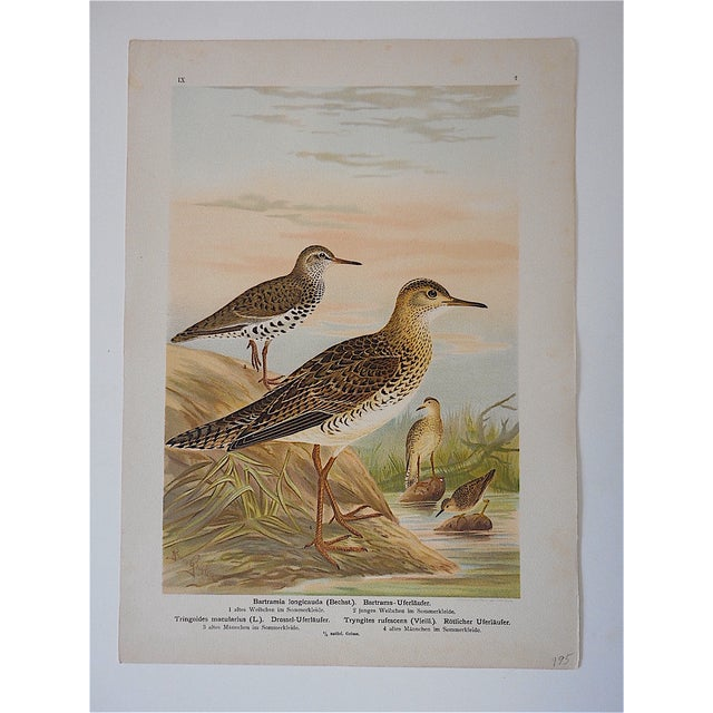 This antique chromolithograph printed in Germany depicts water or shore birds. Printed on one side only. Please view our...