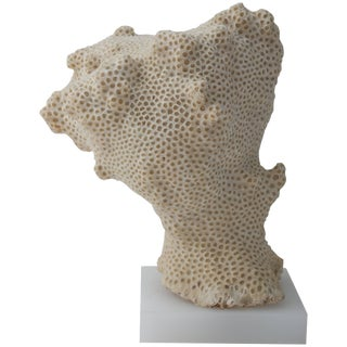 White Specimen Conch Shell Form Coral Mounted on Solid White Lucite Base For Sale