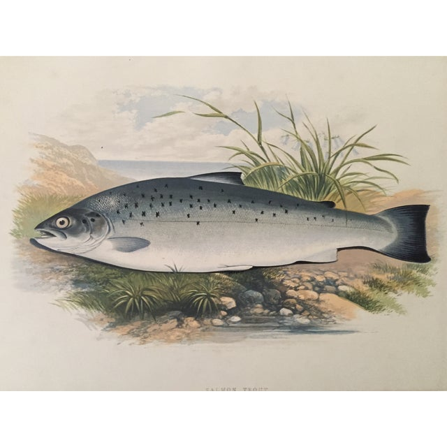 1879 Houghton's London Salmon Trout Lithograph - Image 1 of 3