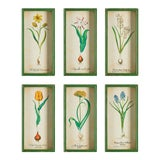 Image of Bulb Study Shadow Box Prints - Set of 6 For Sale