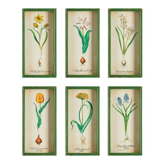 Bulb Study Shadow Box Prints - Set of 6 For Sale