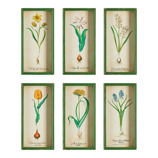 Bulb Study Shadow Box Prints - Set of 6 For Sale