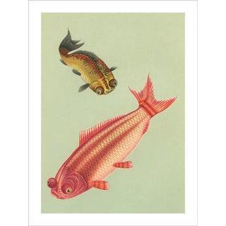 Vintage 'Goldfish' Archival Print For Sale
