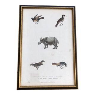 18th Century Framed Animal Print For Sale