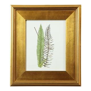 """""""Fern Fronds Ii"""" Original Botanical Specimen Painting by Abigail Vogel For Sale"""