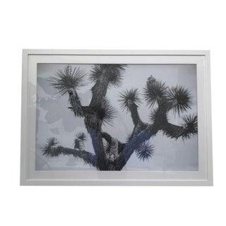 Halation Studio Joshua Tree Photographic Print For Sale