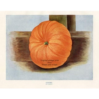 English Pumpkin, 1920s Print For Sale