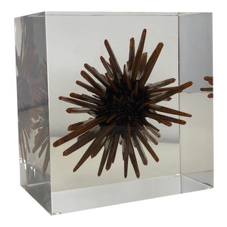 1970s Lucite and Epoxy Resin Sculpture of Sea Urchin For Sale