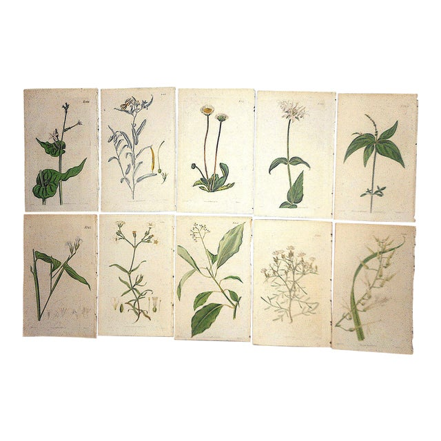 Antique 19th Century Botanical Engravings-Period Hand Color-Set of 10 For Sale