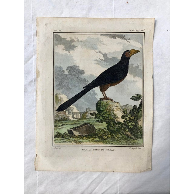 18th Century French Bird Engraving Signed by Jacques De Sève Featuring an Anis For Sale - Image 13 of 13