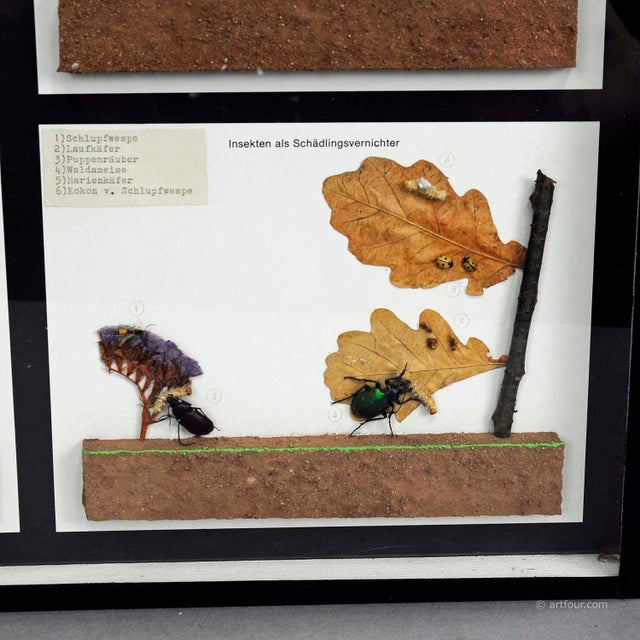 1960s Vintage School Teaching Display Of Usefull Insects For Sale - Image 5 of 6