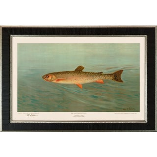American Fish 12 the Rocky Mountain Trout by Harris CFA Edition Giclee Print For Sale