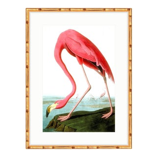 Soicher Marin Flamingo Gold Bamboo Framed Audubon Print For Sale