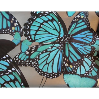 Circa Wallcovering Butterfly Wallpaper For Sale