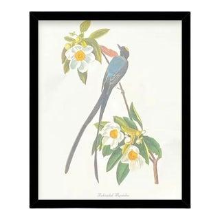 Custom Black Wood Frame of Authentic Vintage John James Audubon Fork Tailed Flycatcher Bird & Botanical Print For Sale