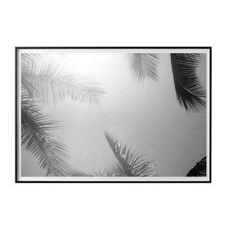 """Palm Frames #2"" Unframed Photographic Print For Sale"