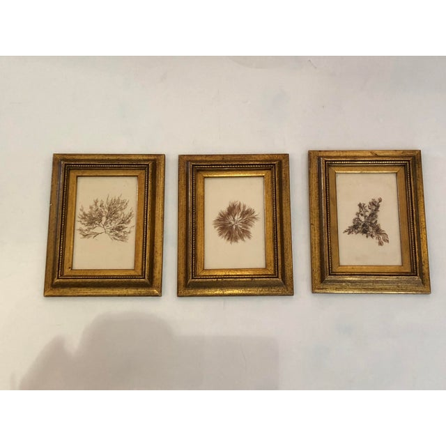 19th Century Pressed Organic Botanicals in Giltwood Frames -Set of 3 For Sale - Image 11 of 11