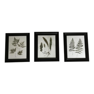 Botanical Framed Pressed Ferns- Set of 3