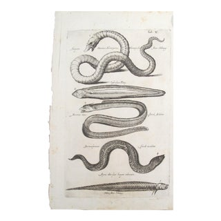 17th Century Italian Vintage Sea Serpent and Eel Book Page, Colored Steel Engraving