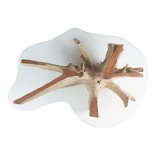 Superb Glass Top Teak Root Coffee Table Download Free Architecture Designs Scobabritishbridgeorg