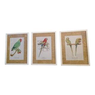 Framed Parrot Prints - Set of 3 For Sale