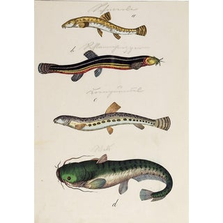 Hand Colored Eels & Fish Woodcut Print For Sale