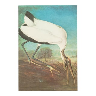 1966 Vintage John James Audubon Wood Ibis Reproduction Lithograph Print For Sale