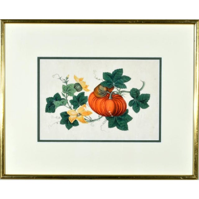 Chinese Fruit Watercolor Paintings on Pith Paper - Set of 8 For Sale - Image 10 of 10