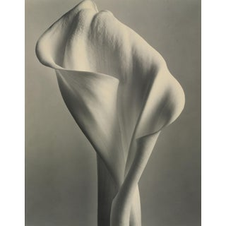 """Tom Baril, """"Calla Lily"""" Photograph For Sale"""
