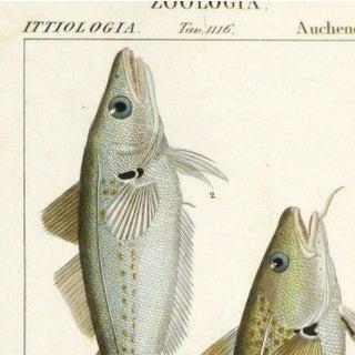 Freshwater Fish Engraving Print, C. 1830 Preview