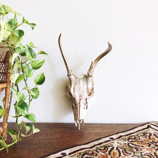 2000 - 2009 Vintage Deer Skull With Gold Painted Antlers For Sale - Image 5 of 5
