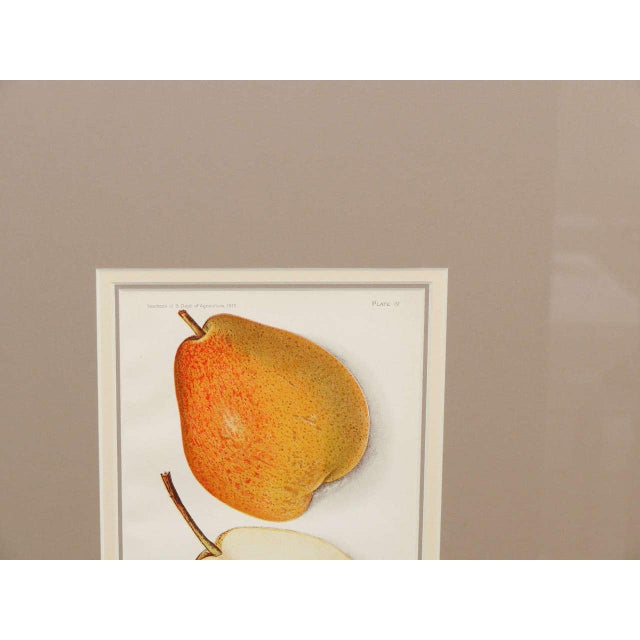 Printmaking Materials Architectural Digest Fruit Print For Sale - Image 7 of 8