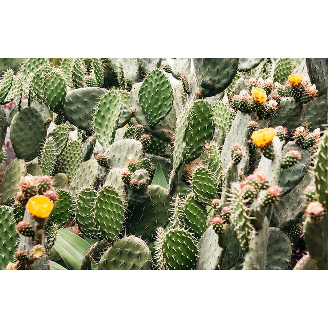 """Not Yet Made - Made To Order """"Prickly Pear Flowers"""" Original 24x36 Photograph For Sale - Image 5 of 5"""