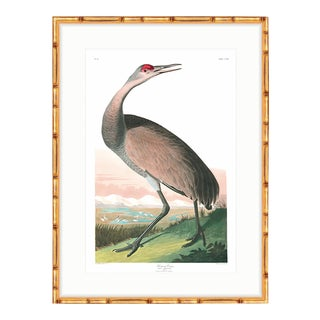 "Whooping Crane Gold Bamboo Framed Audubon ""Birds of America"" Print For Sale"