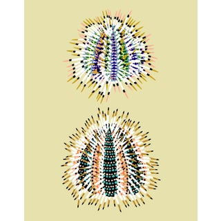 Urchin Mini Giclee Print by Sarah Gordon For Sale