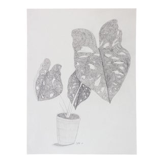 """""""Caladium 1"""" House Plant Graphite Drawing For Sale"""