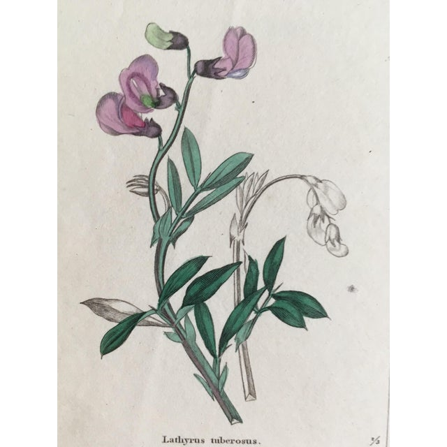 Botanicals by Benjamin Maund C. 1854 For Sale - Image 6 of 8