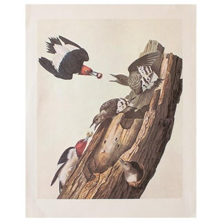 1966 Vintage Cottage Print of Red-Headed Woodpecker by Audubon For Sale