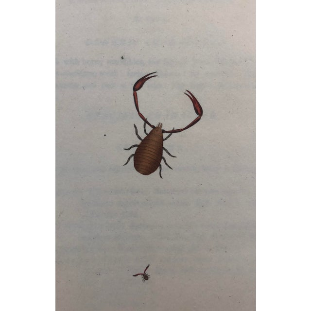 19th Century Insect Hand Colored Print For Sale - Image 6 of 7