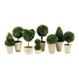 Kenneth Ludwig Chicago Boxwood Toparies in Pots - Set of 8 For Sale
