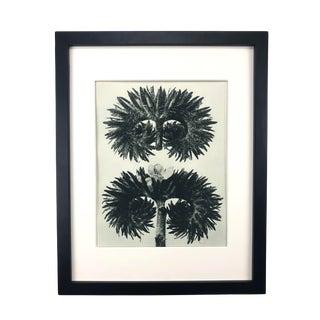 Framed Antique Photogravure Blossfeldt Botanical Print - No. 90 For Sale
