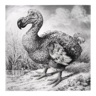"Contemporary ""Dodo I"" Rick Shaefer Charcoal Print For Sale"