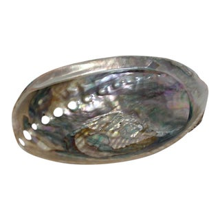 Petit Abalone Shell For Sale
