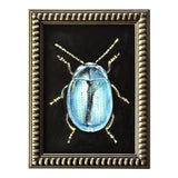Image of Contemporary Oil Painting of a Beetle by Susannah Carson For Sale