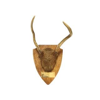 Vintage Deer Antler Taxidermy Wall Mount For Sale