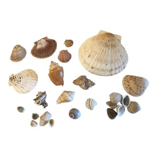 Natural Sea Shells - Set of 25