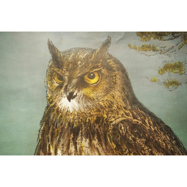 Swedish Vintage Owls School Poster by Nils Tirén, 1960s For Sale - Image 4 of 7